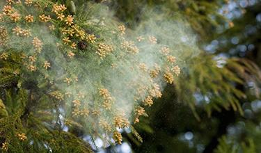 花粉モード