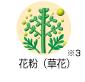 花粉(草花)
